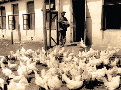 "Solomon Nodel, manager of the poultry farm at the ""Vidrodzhennia"" [Renaissance] collective farm. Arrested on 13 August 1938 on charges of conducting religious propaganda and belonging to a Zionist organization. Released after five months. Archives of the Joint"