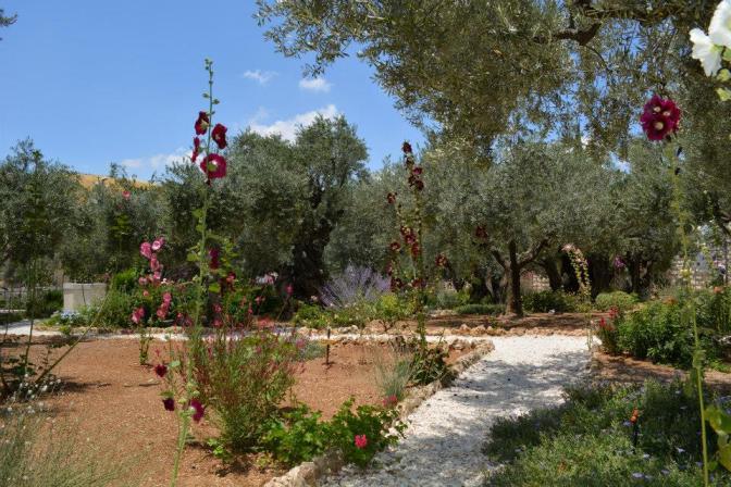 6. Hollyhocks in the garden of Gethsemane. Photo courtesy by Vasyl Makhno
